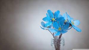 small blue flowers ultra hd desktop