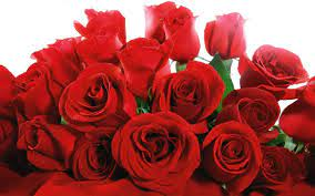 Red Roses Wallpapers - Wallpaper Cave