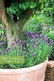 Underplanting Stock Photos U0026 Underplanting Stock Images  AlamyUnderplanting Fruit Trees