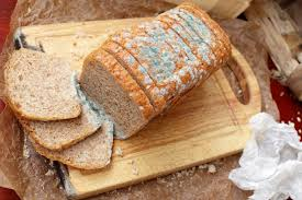 Ask Well Is It Safe To Eat Moldy Bread The New York Times