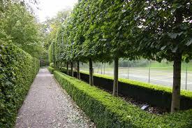 Small Picture special trees for landscape design Garden Design Pinterest