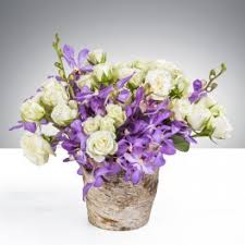 orchids roses