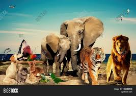 background images animals. Beautiful Background Photo Manipulation Animals Background Manipulated By Photoshop Useful For  Or Works For Background Images Animals