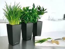 office pot plants. Most Inspiring Good Desk Plants Best Of Office Design Pot Large I