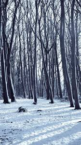 cold-winter-forest-snow-nature-mountain ...