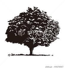 木のイラスト素材 44879887 Pixta