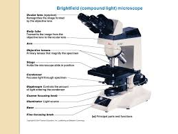 chapter 3 observing microbes through a microscope ppt download rh slideplayer com