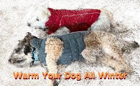 ThinkPet Warm Reversible Dog Coat - Thick Padded ... - Amazon.com