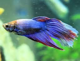 types of aquarium fish. types of aquarium fish h