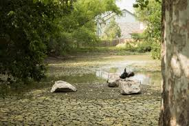 Bexar's Eye: Eden Duck Pond Is Poised to Return to Its Former Glory