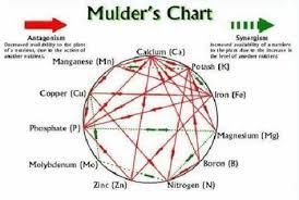 Plant Nutrient Interaction Chart Soil Nutrients Gardening Zone 8b Organic Soil Soil
