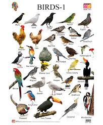 Birds Chart With Names In English Names Of Birds Hos Ting