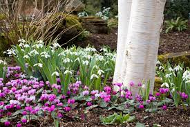 Small Picture Garden ideas Border ideas Plant Combinations Bulb Combinations