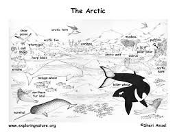 Small Picture Antartic Ocean Animals Coloring PagesOceanPrintable Coloring