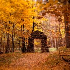 落ち葉がおしゃれでかっこいい壁紙