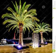 Palm Tree Night Light Palm Trees In The Night Lights In Marina Porto Montenegro
