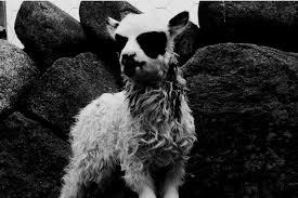Animal Photo Albums The 10 Best Black Metal Albums To Own On Vinyl Vinyl Me