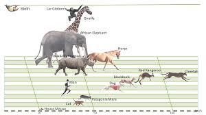 Animal Speed Chart Mammals Locomotion 2nd Version