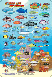 Maps Card Mini – Keys Fish Florida Franko