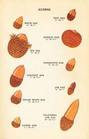 Types Of Acorns Chart Garden Note 85 Acorns Nibsblog Wordpress Com Acorn