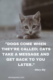 20 Funny Cat Quotes Sayings Images Quotes I Like Animal