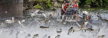 Usfws introduced asian silver carp