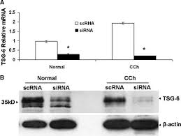 tsg 6 controls transcription and activation of matrix knockdown efficiency of tsg 6 sirna both normal and cch fibroblasts were cultured in