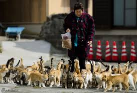 hundreds of cats. Delighful Cats According To The Atlantic Aoshima Island Is One Of A Dozens Habitats For  Great Numbers Cats Hundreds Cats Live In Abondoned Wood Cabins  For Of Cats V