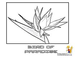 Small Picture Orchid Flower Coloring Pages Coloring Pages