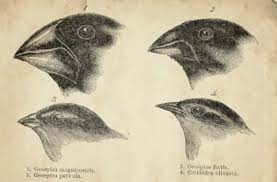 historyc darwin natural selection finches gif history of natural selection