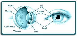 Image result for corneal transplant