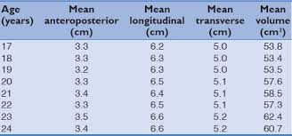 Uterus Size In Cm During Pregnancy Chart Sonographic Measurement Of Uterine Dimensions In Healthy