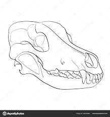 Disegni Cani Oggetto Il Cane Di Cranio Sfondo Bianco Lateralmente