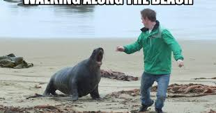 Nek Minnit, At a beach in New Zealand with Aaron Loader and a Sea lion -  Nek Minnit , Photos at beach with New Zealand Sea lion