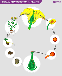 Sexual Reproduction In Plants Features And Its Process