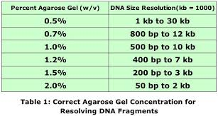 Dna Fragments Resolve Better On Correct Percent Agarose Gel