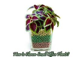 small office plant. delighful small how to choose small office plants for plant