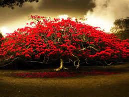 Tree hd wallpaper, Flowering trees ...