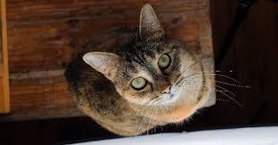 refuge pour chat abandonné