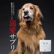 83%が健康維持を実感!】純度100%の犬用コラーゲンサプリ『Ta-Ta(タータ)』を作りました!   Retriever Life  [レトリーバーライフ]