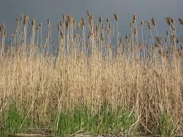 tall grass texture 0008 Texturelib