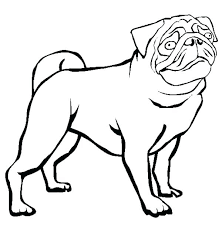 600x614 pug puppy coloring pages free pictures to color colouring â fuhrer