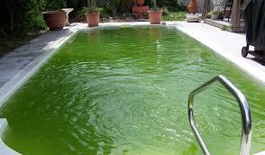 Bật mí cách diệt rêu xanh trong hồ xi măng ngoài trời cực hiệu quả