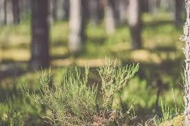 outdoor woods backgrounds. Modren Backgrounds Nature Green Wood Sunlight Backgrounds  Vi Stock Photo Image Intended Outdoor Woods