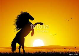 wild horses sunset. Delighful Horses Wild Horse At Sunset Rearing Up And Horses Sunset N