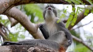 Monkey scratching its butt