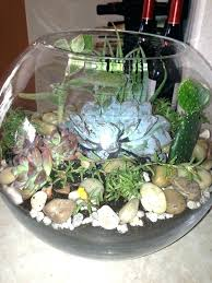 succulents in glass bowl succulent plants