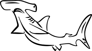 Small Picture hammerhead shark coloring page hammerhead shark coloring pages for