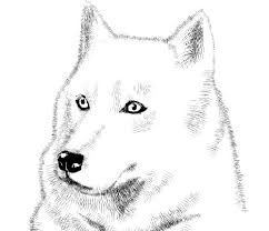A picture which consists only of actual white and black pixels is a binary image. This Drawing Is Too Details Draw A White Wolf With Short Hair Brush Manga Materials