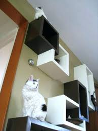 Floating Shelves For Cats Simple Cat Shelves Ikea Floating Shelves For Cats Cat Shelves Home Design